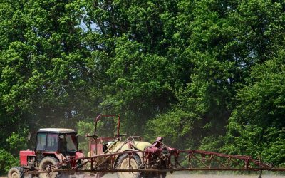 Capping nitrogen for export hay quality
