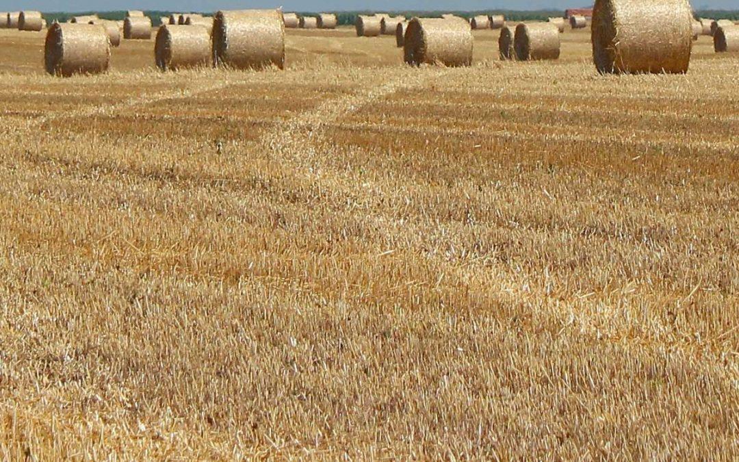 Hay Report – 27 August 2021